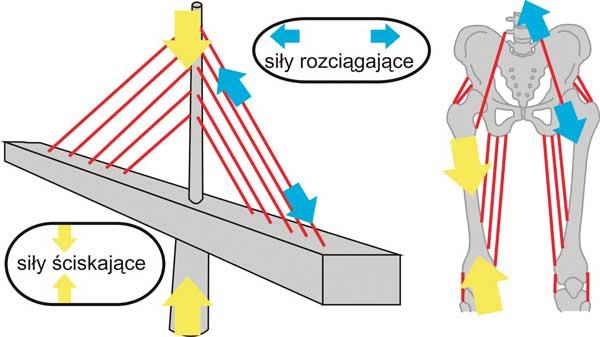 Wzmacnianie kręgosłupa2
